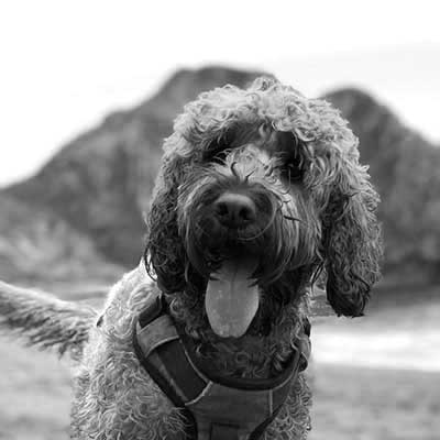 Final The Cockapoo - Youth Engagement Cockapoo
